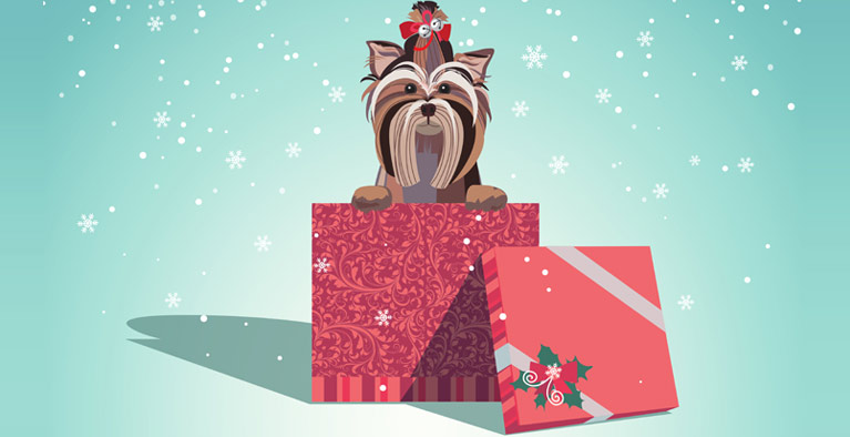 Jingle the Dog